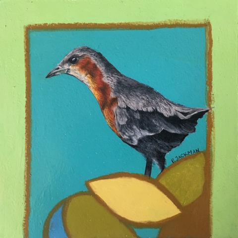 Rusty-flanked Crake by AFC