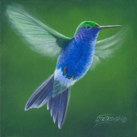 Sapphire-bellied Hummingbird by AFC