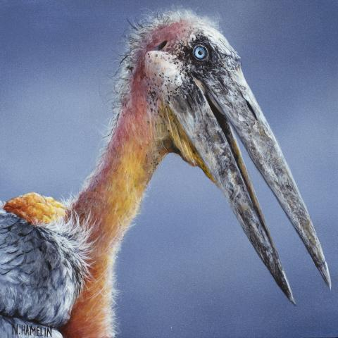 Greater Adjutant by AFC