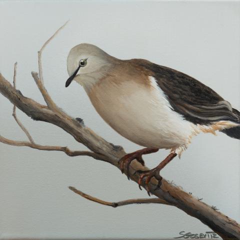 Grenada Dove by AFC