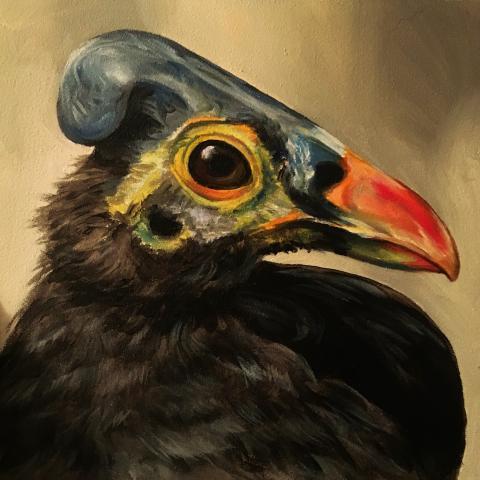Maleo, Maleo Megapode, Gray's Brush-turkey by AFC