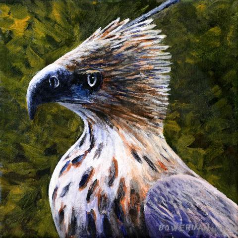 North Philippine Hawk-eagle by AFC