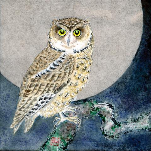 Seychelles Scops-owl, Seychelles Scops Owl by AFC