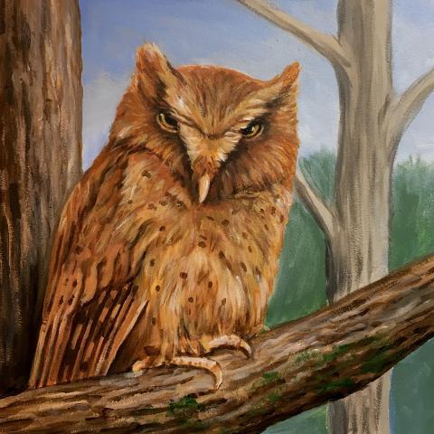 Serendib Scops-owl, Serendib Scops Owl by AFC