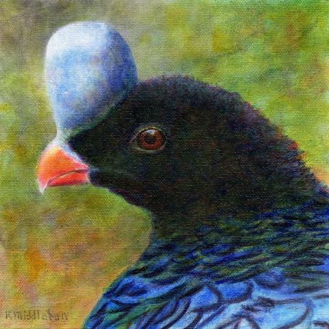 Helmeted Curassow, Northern Helmeted Curassow by AFC