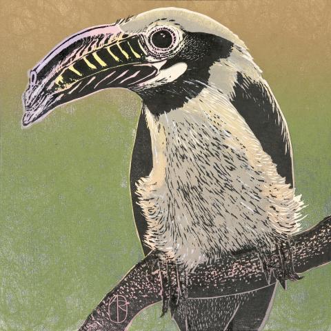 Visayan Hornbill, Tarictic Hornbill by AFC