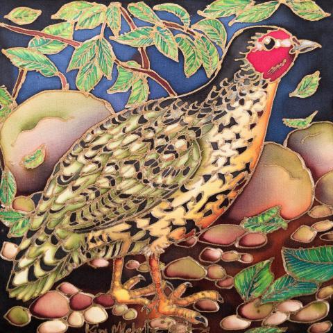Manipur Bush-quail, Manipur Bush Quail, Manipur Bush-Quail by AFC