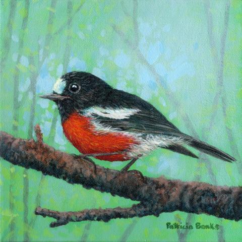 Norfolk Robin, Norfolk Island Robin by AFC