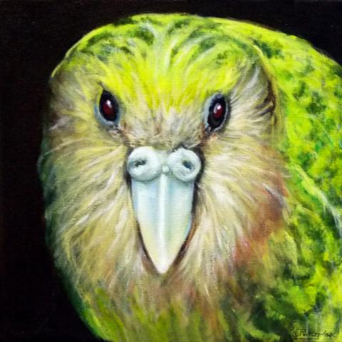 Night Parrot by AFC