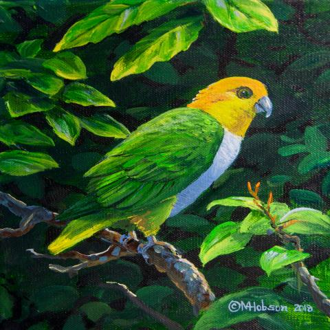 Green-thighed Parrot, Eastern White-bellied Parrot by AFC