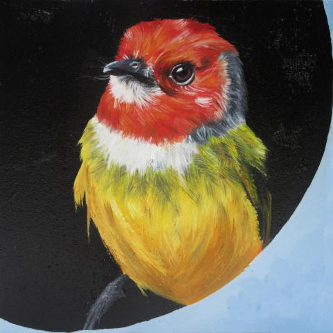 Lulu's Tody-flycatcher, Johnson's Tody-flycatcher, Lulu's Tody-Flycatcher by AFC