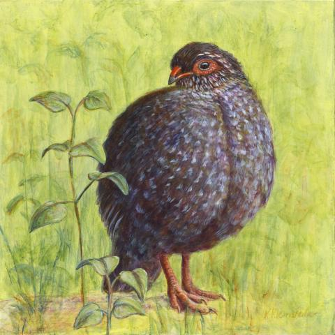Nahan's Partridge by AFC