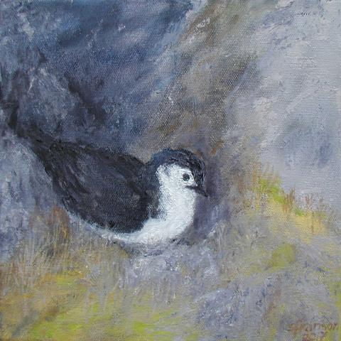 Bryan's Shearwater by AFC