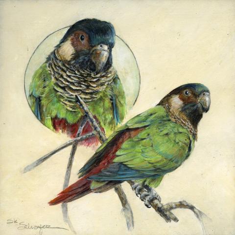 Santarem Parakeet by AFC