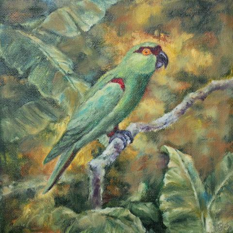 Maroon-fronted Parrot by AFC