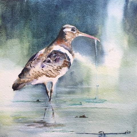 Australian Painted-snipe, Australian Painted-snipe by AFC