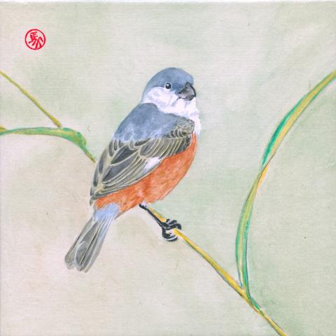 Marsh Seedeater by AFC