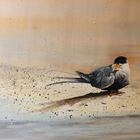 Black-bellied Tern by AFC