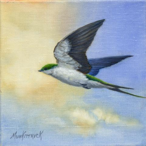 Bahama Swallow by AFC