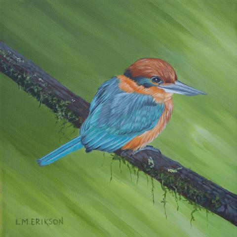 Guam Kingfisher, Micronesian Kingfisher by AFC