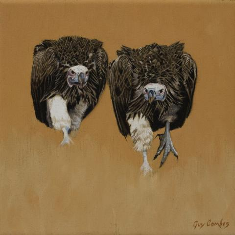 Lappet-faced Vulture by AFC