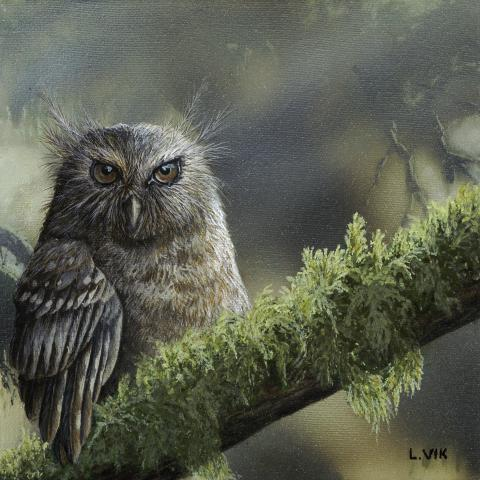 Long-whiskered Owlet by AFC