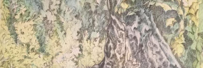 Abstracts of Wildlife and Nature with Linda Harrison-Parsons