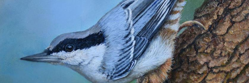 Create Conservation Project/Cause -  | Yvette Lantz