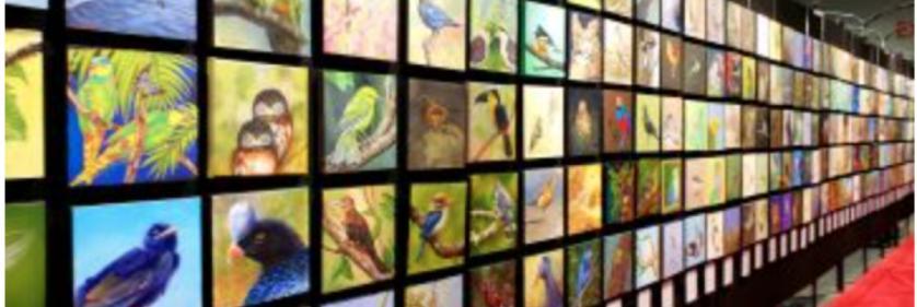 <em>Edit Conservation Project/Cause</em> Silent Skies Mural Project -    Dianne Munkittrick
