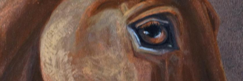 <em>Edit Conservation Project/Cause</em> Wild Horse and Burro program -  | Jess Hansen