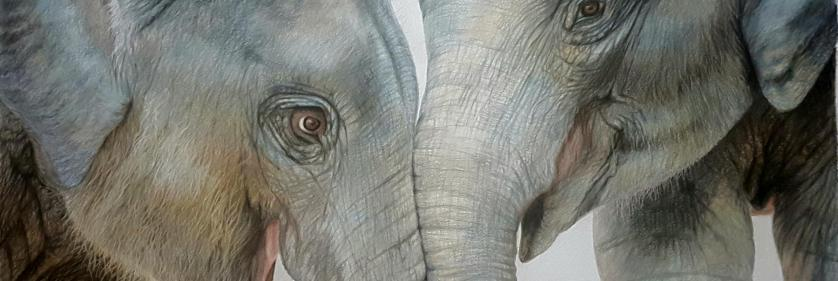 <em>Edit Conservation Project/Cause</em> Best Friends  - Helping MONITOR save lesser known species from extinction through both the legal and illegal wildlife trade | Charlotte Williams