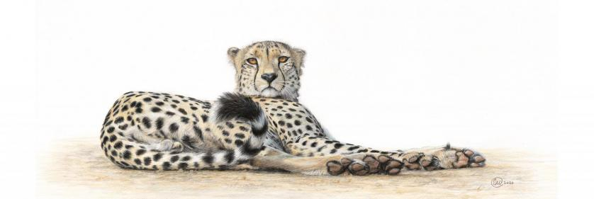 <em>Edit Conservation Project/Cause</em> I Dare You - Raising funds for Cheetah Conservation Fund | Charlotte Williams