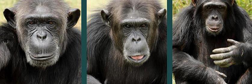 <em>Edit Conservation Project/Cause</em> Ol Pejeta Sweetwaters Chimp Santuary -  | Douglass Lockyer