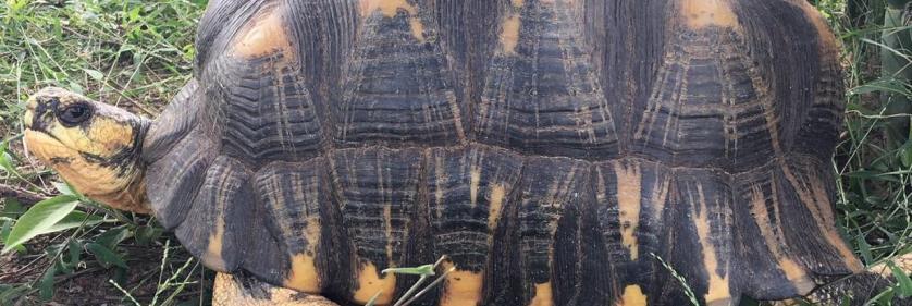 <em>Edit Conservation Project/Cause</em> Madagascar - Radiated Tortoises -  | Matt Patterson