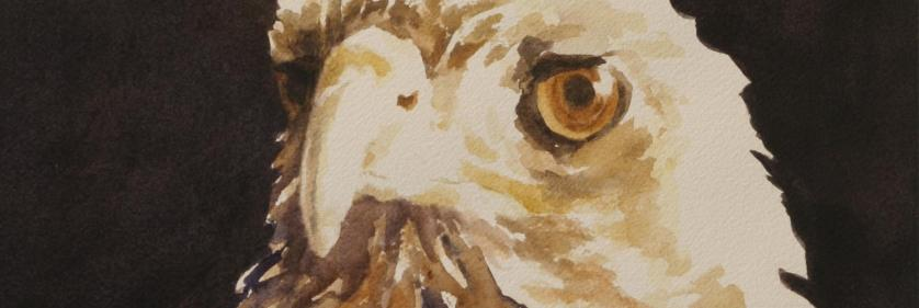<em>Edit Conservation Project/Cause</em> DD the Hawk - 50% of artist&#039;s sales commission for &quot;DD the Hawk&quot; will be donated to the SPCA of Monterey County and 25% of the artist&#039;s sales commission for &quot;DD the Hawk&quot; will be donated to the Artists for Conservation organization   Debbie Griest