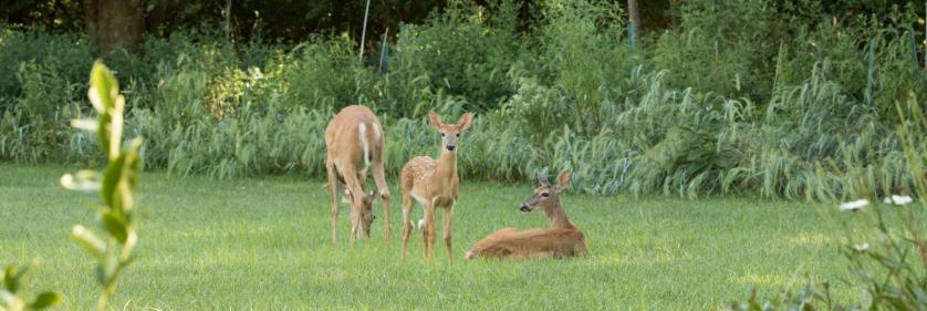 <em>Edit Conservation Project/Cause</em> St Louis County Parks  -  | Sandy Brooks