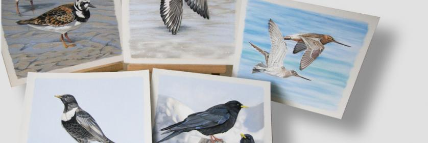 Create Conservation Project/Cause - The New European Breeding Bird Atlas   Diana Hoehlig