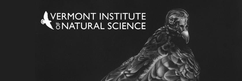 <em>Edit Conservation Project/Cause</em> VINS Raptor &amp; Nature Center - Vermont Institute of Natural Science | Diana Hoehlig