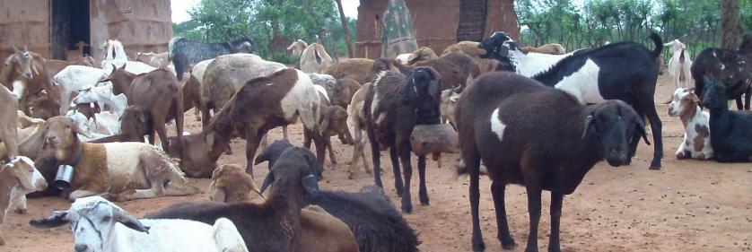 <em>Edit Conservation Project/Cause</em> African People &amp; Wildlife -  | Alison Nicholls