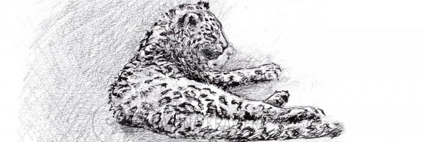 <em>Edit Conservation Project/Cause</em> Sketch for Survial  - &quot;Future Phantom&quot;, 30 x 21cm  | Carina Kramer