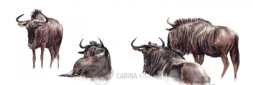 <em>Edit Conservation Project/Cause</em> 100% Donation to the Born Free Foundation - &quot;Heat&quot;, a 40 x 15cm watercolour painting | Carina Kramer