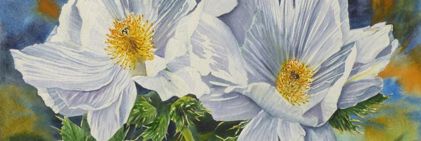 Create Conservation Project/Cause - watercolor | Susan Hildreth