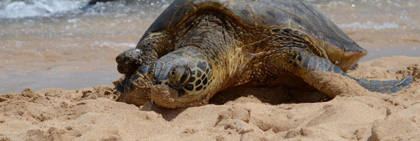 <em>Edit Conservation Project/Cause</em> Sea Turtle Conservation -  | Carleen Ross