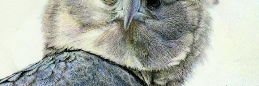 <em>Edit Conservation Project/Cause</em> Harpy Eagle - Belize - World Land Trust 40th Anniversary.... | Nick Day