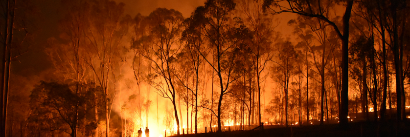 <em>Edit Conservation Project/Cause</em> Australia's bushfire emergency 2020 - Facebook art auction for the Koala Hospital | Geraldine Simmons