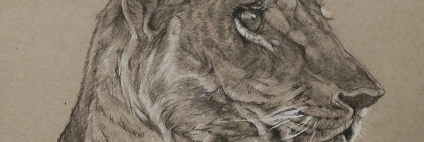 <em>Edit Conservation Project/Cause</em> Sketch for Survival  - Wildlife Artists Supporting Conservation | Geraldine Simmons