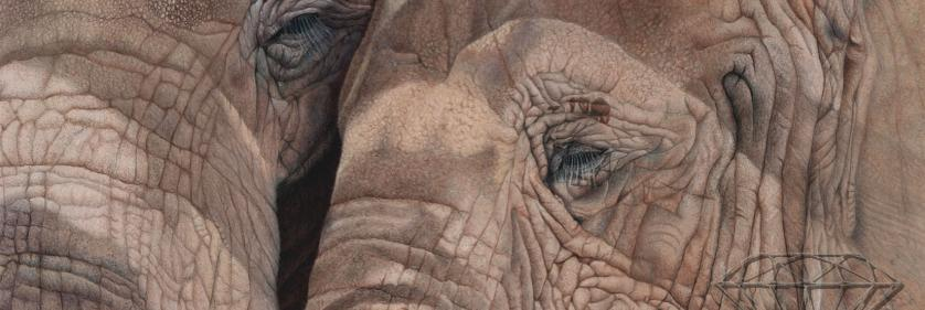 Create Conservation Project/Cause - PAWS | Gemma Gylling