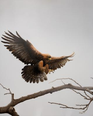 Golden Eagle | Wallhanging by Susan Gosevitz | Artists for Conservation 2020