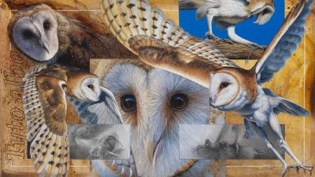 Barn Owl Montage   Wallhanging by David Kitler   Artists for Conservation 2020