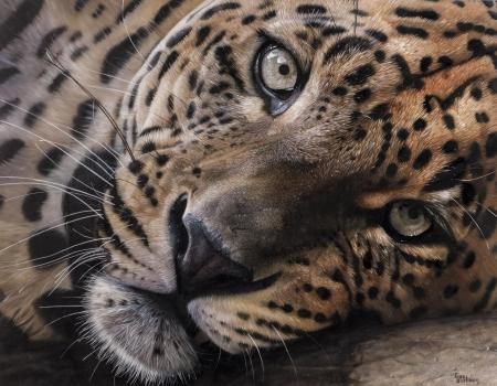 Lazy Leopard | Wallhanging by Garry Fleming | Artists for Conservation 2020
